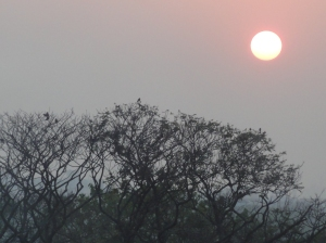 My last evening in Kolkata