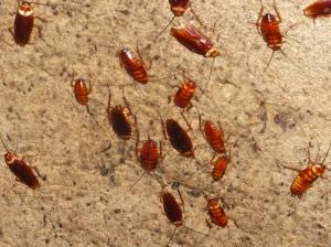 Cockroaches!