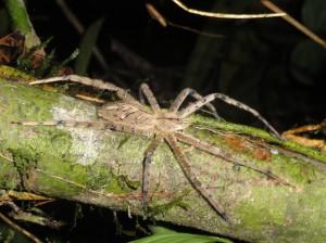 The biggest spider I've ever seen