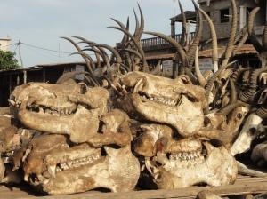 Hippo heads at Lomé's Fetish Market