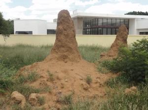 Termite hills in Gaborone