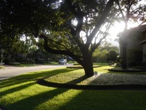Low sun in Houston